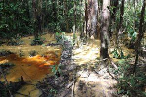 Contamination of a river
