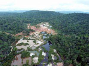 deforestation rainforest