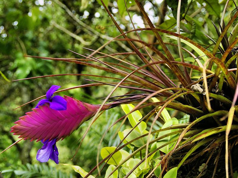Fleur en forêt - Guyane