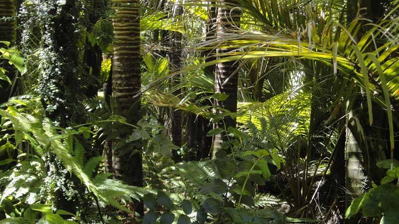 Forêt Guyane Mina Verde