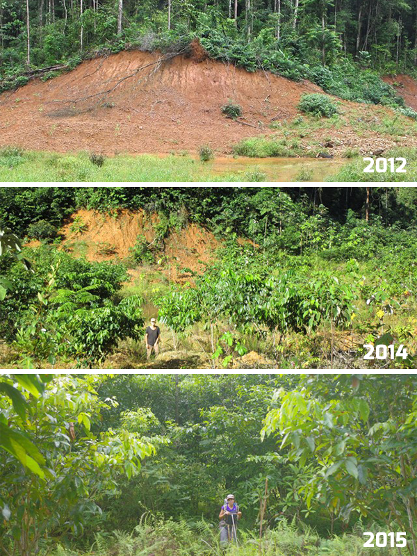 Evolution of a plantation by Solicaz